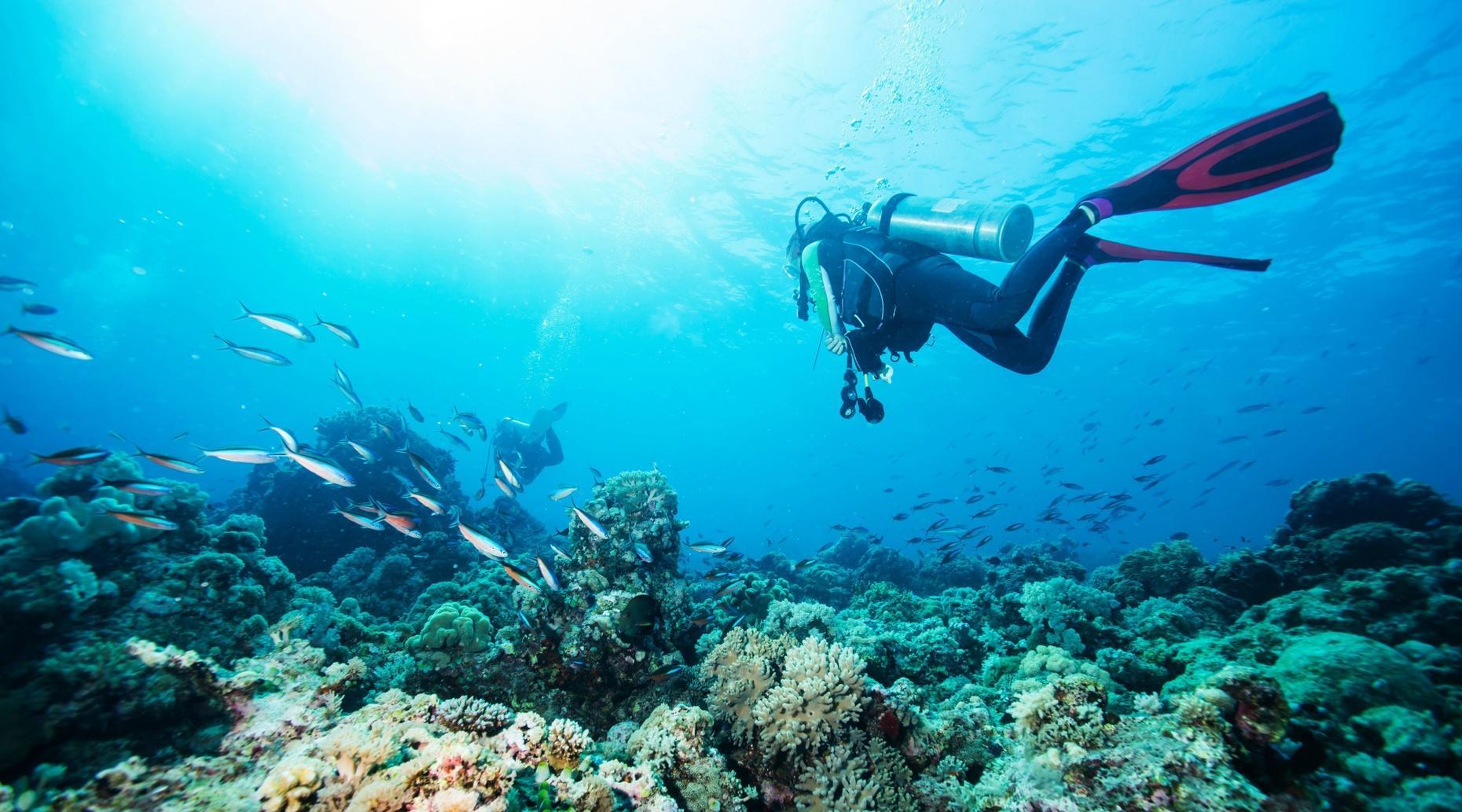 Private Dive Charter in the Dominican Republic