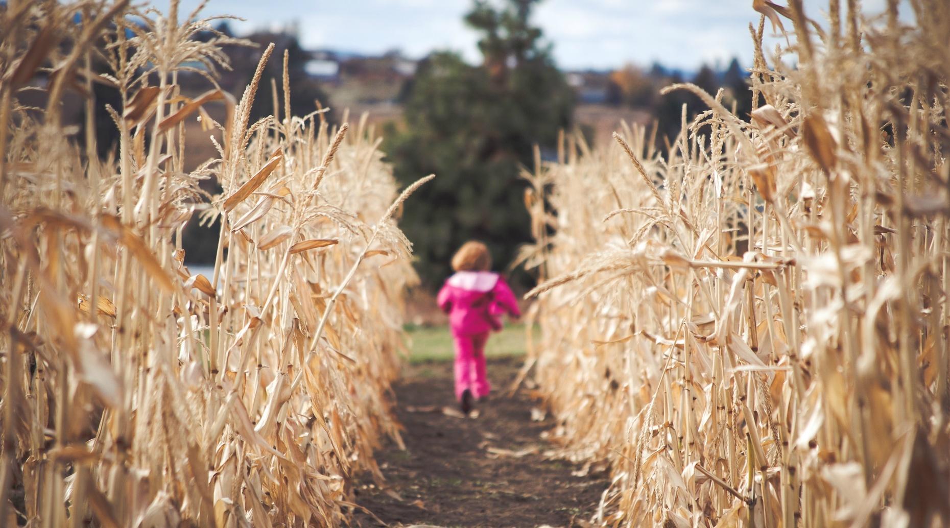 Provo Corn Maze Adventure