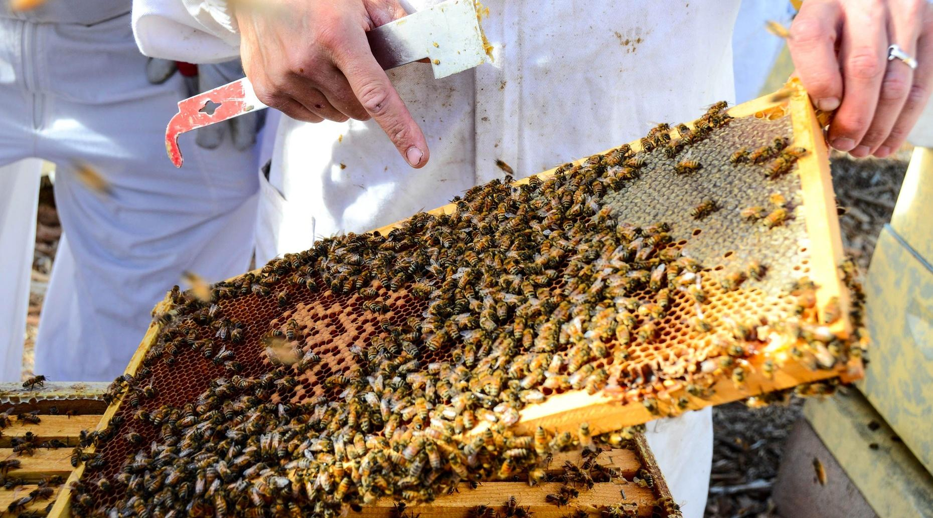 San Francisco Beginner Beekeeping Class In San Francisco Book