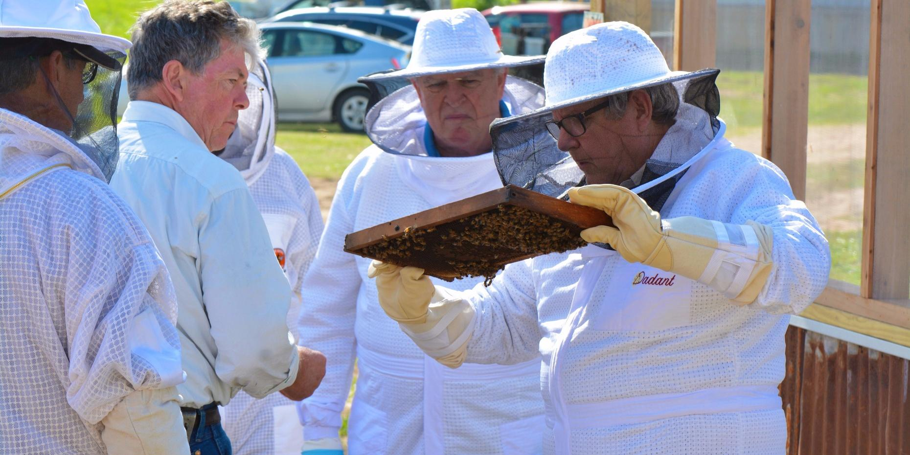 Small Group Beekeeping Lesson in Navasota