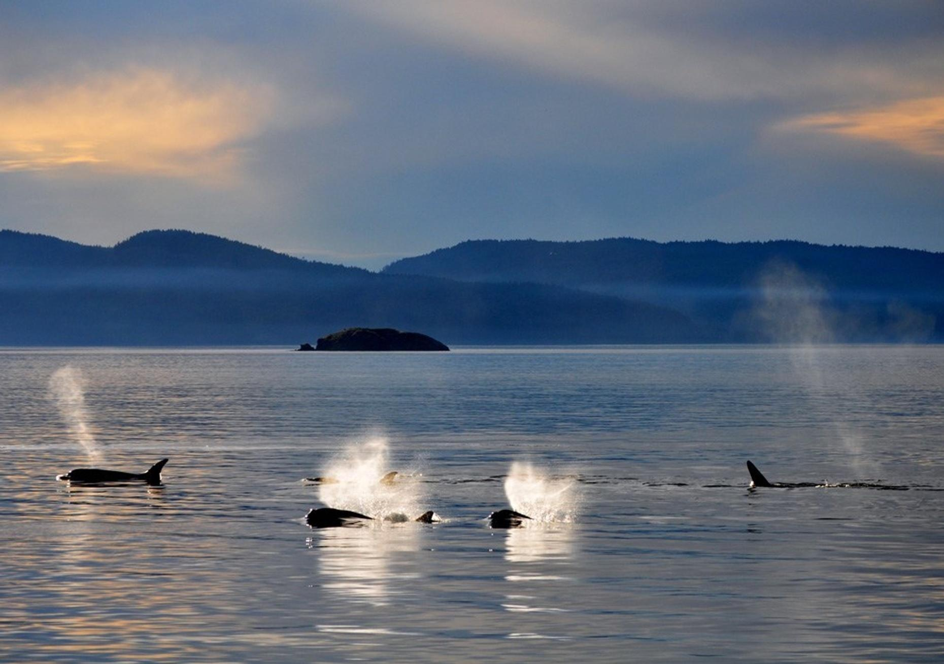 Orcas Island Whale Watch