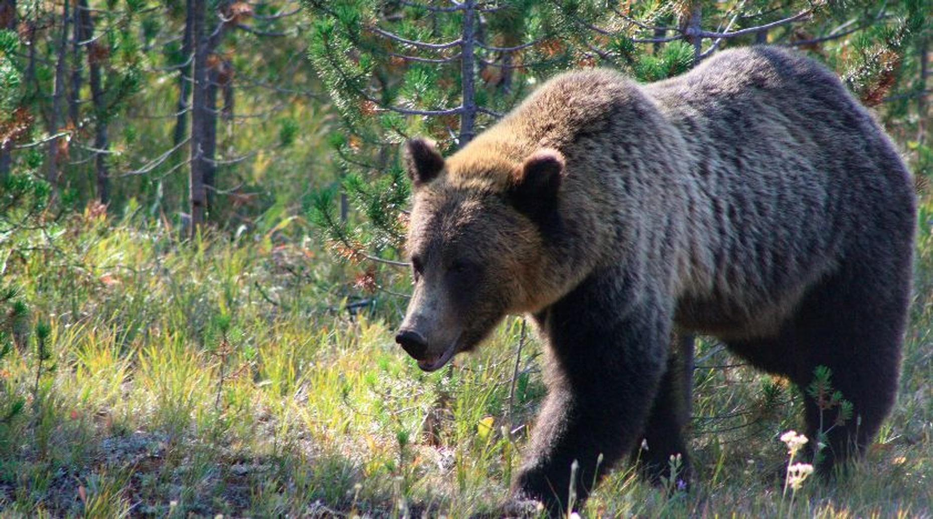 Half Day Bear and Wilderness Tour in Alaska