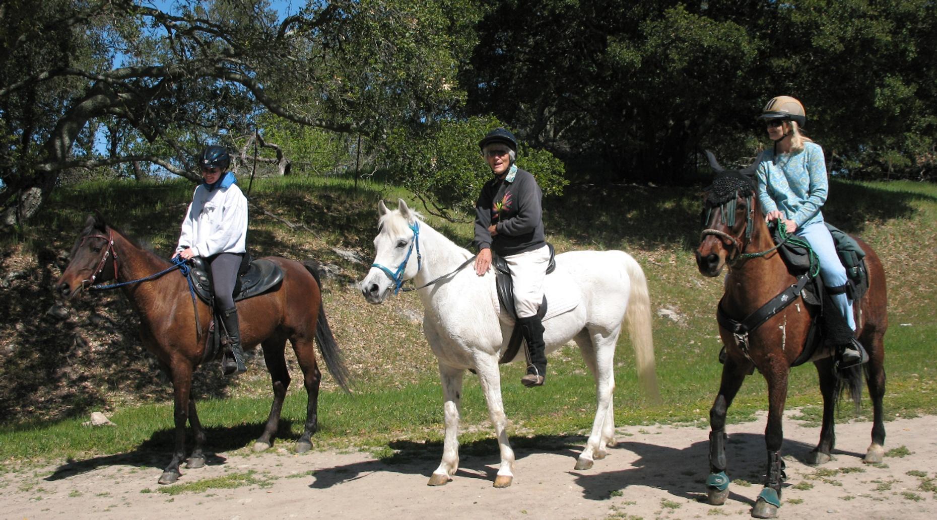 Horseback Gymnastics Clinic Series Cross Rails
