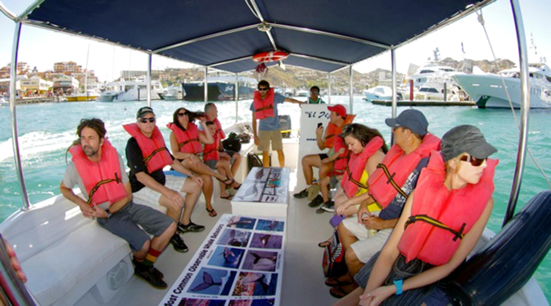 Guided Whale Watching Tour in Cabo San Lucas