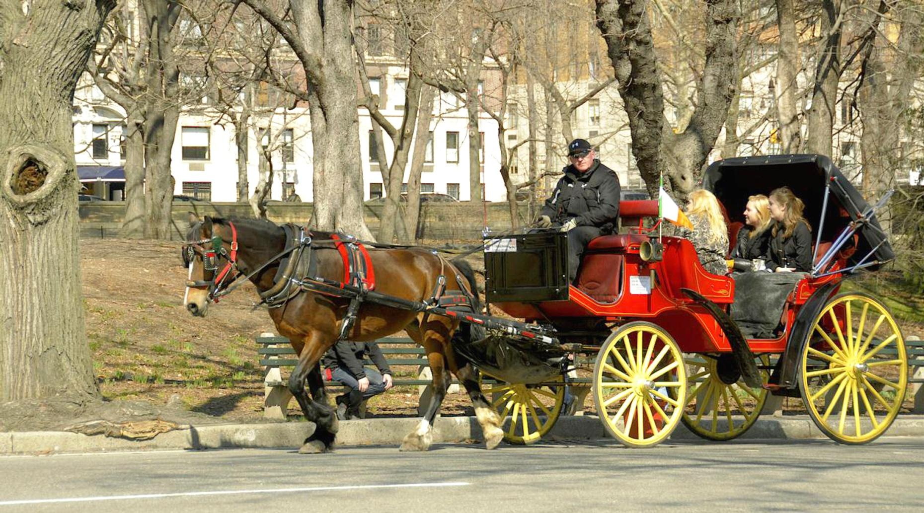 Branson's Private Group Christmas Carriage Ride in the Park