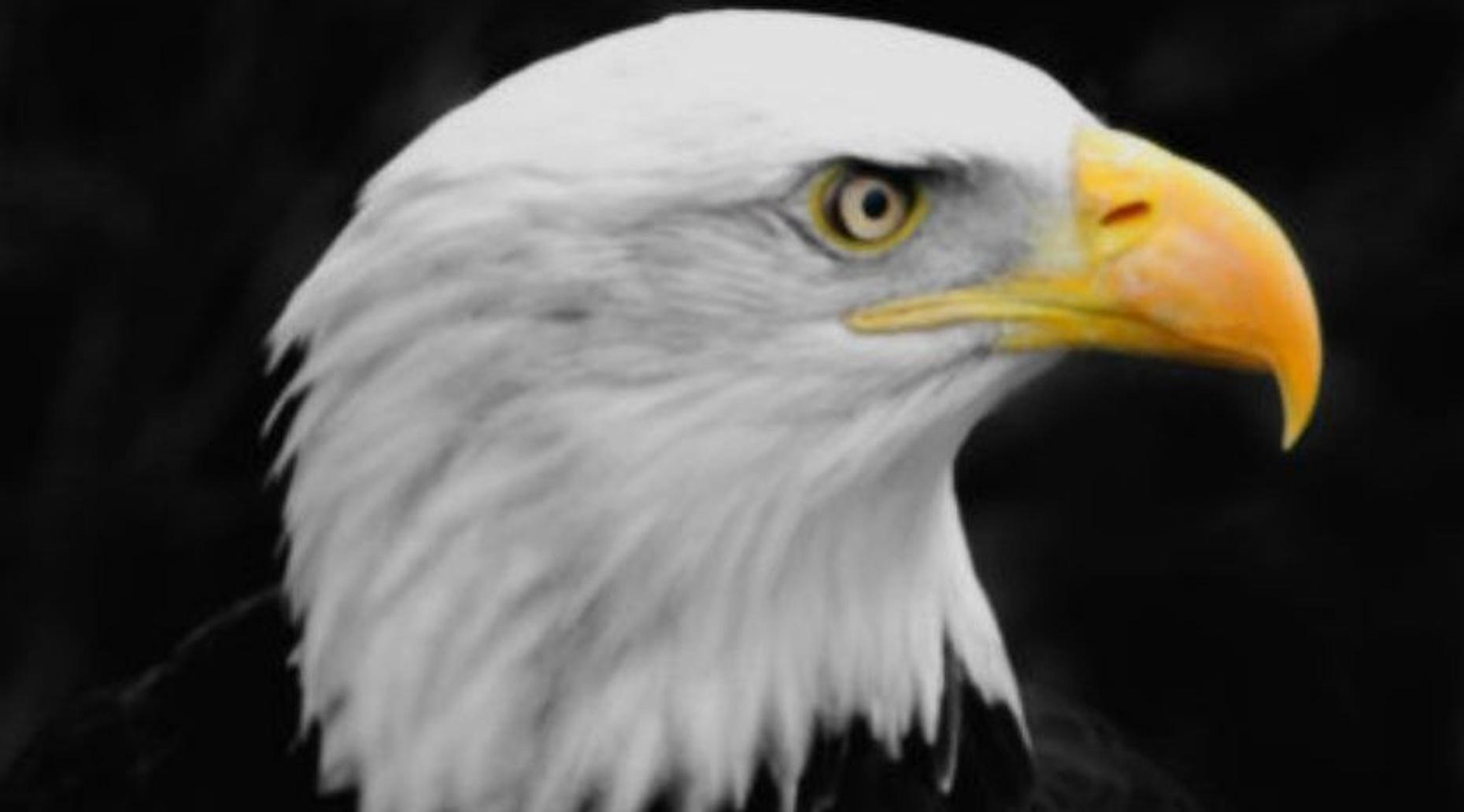 Eagles Sightseeing Excursion on Lake Hopatcong
