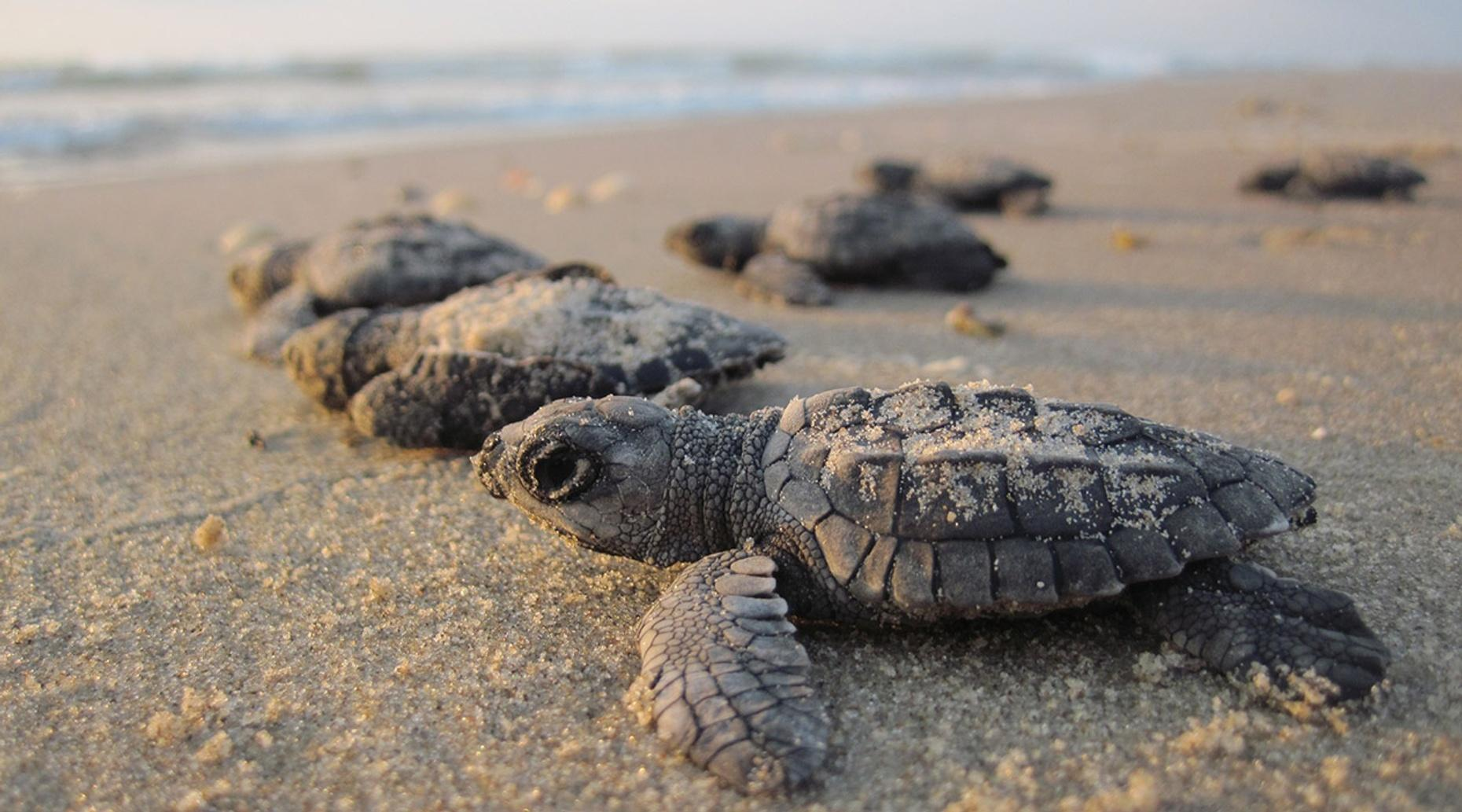 Estuary Boat Tour & Sea Turtle Camp in Puerto Vallarta