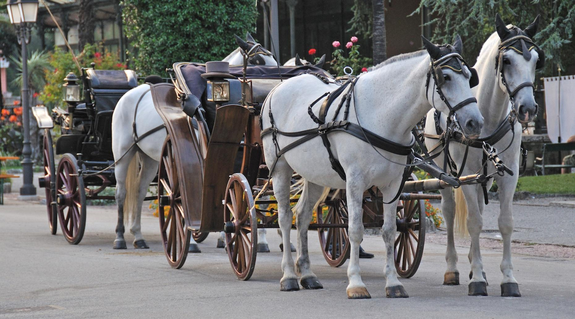 One-Hour Horse Carriage Ride in Bend
