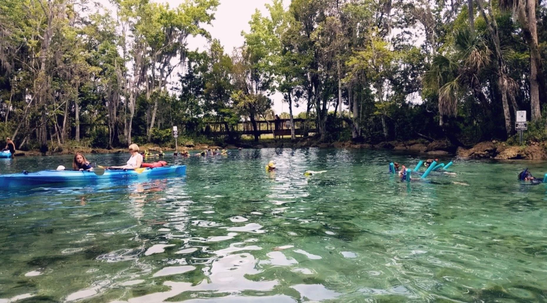 4-Hour Single Kayak Rental and Manatee Viewing in Crystal River