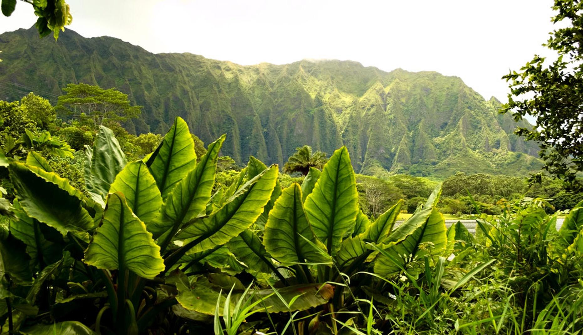 Guided Tour of a Bamboo Forest & Waterfalls in Hawaii