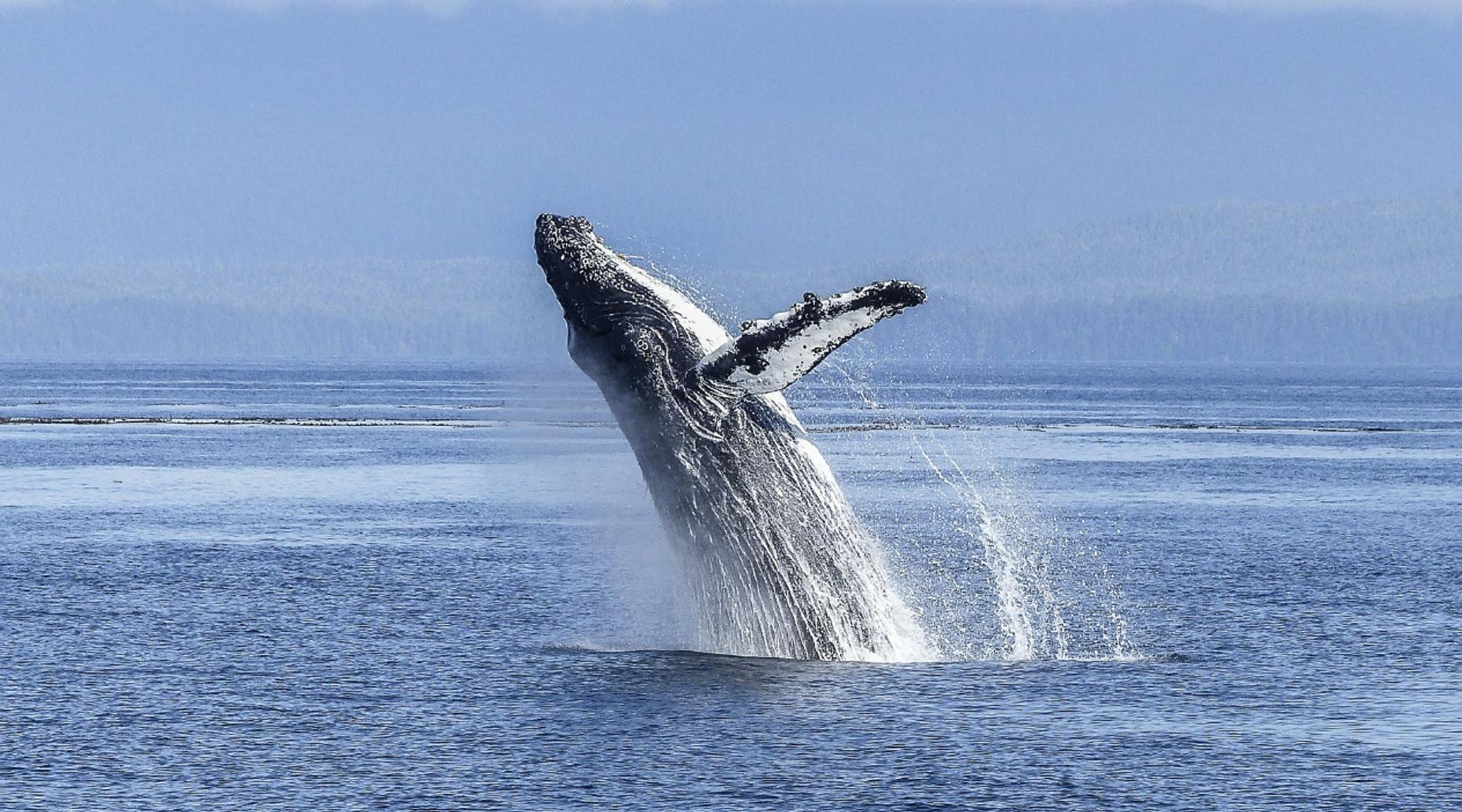 Morning Sailing and Whale Watching Tour in San Diego