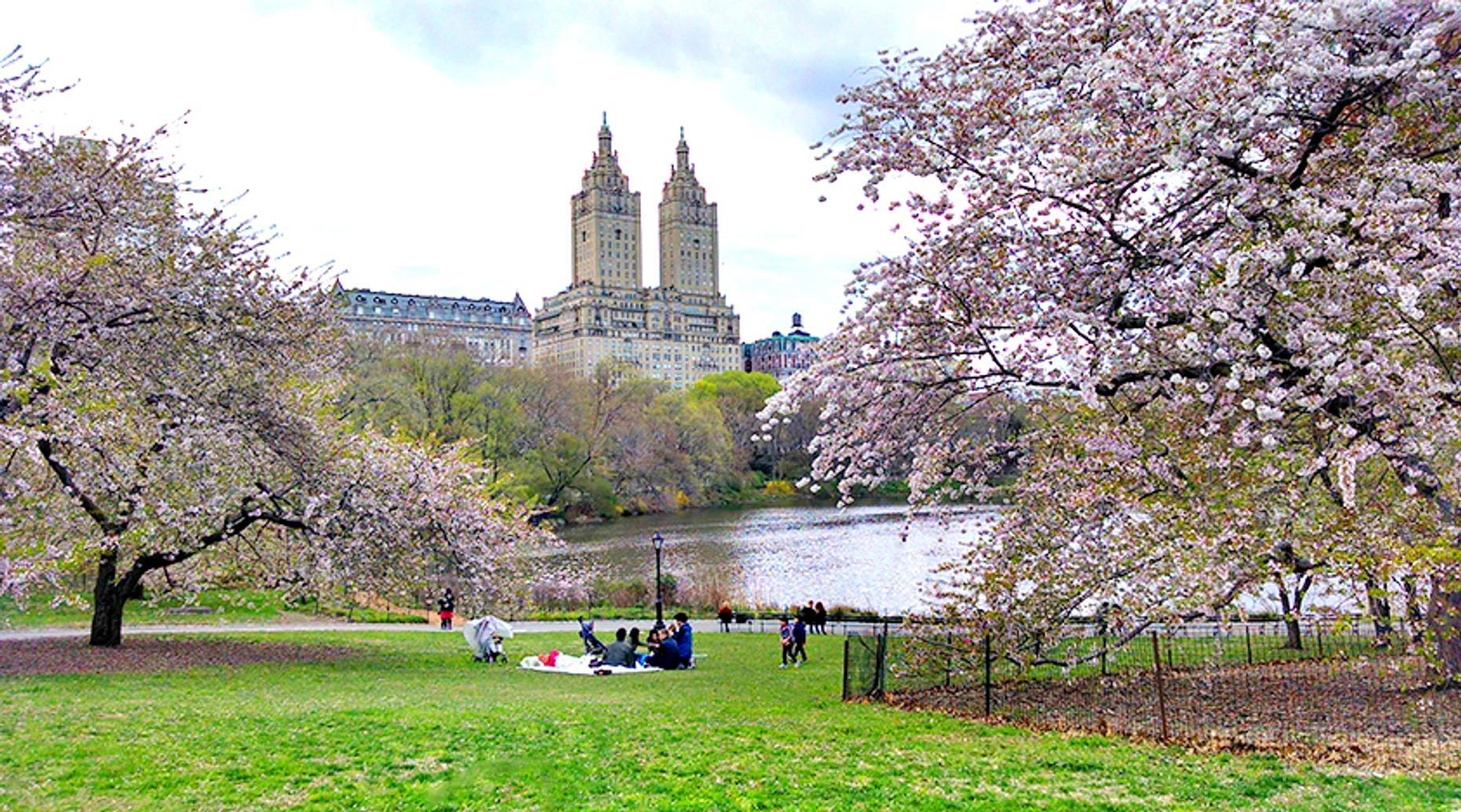 Three-Hour Central Park Pedicab Tour