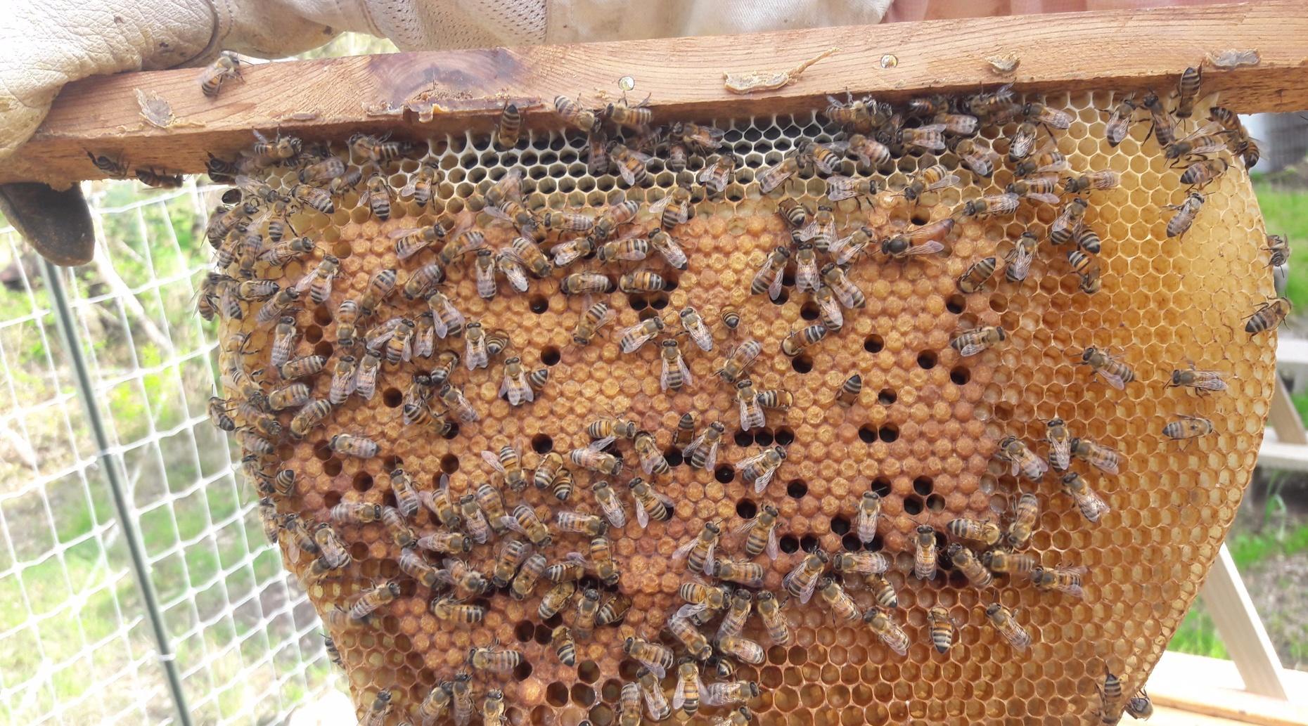 Beekeeping 101 - Getting Started in Beekeeping