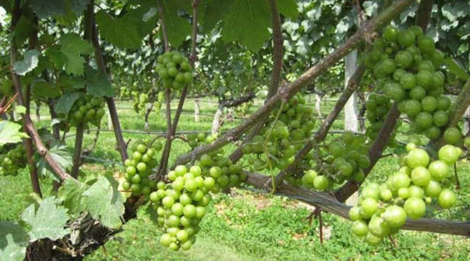 Guided Winery Tour in North Fork