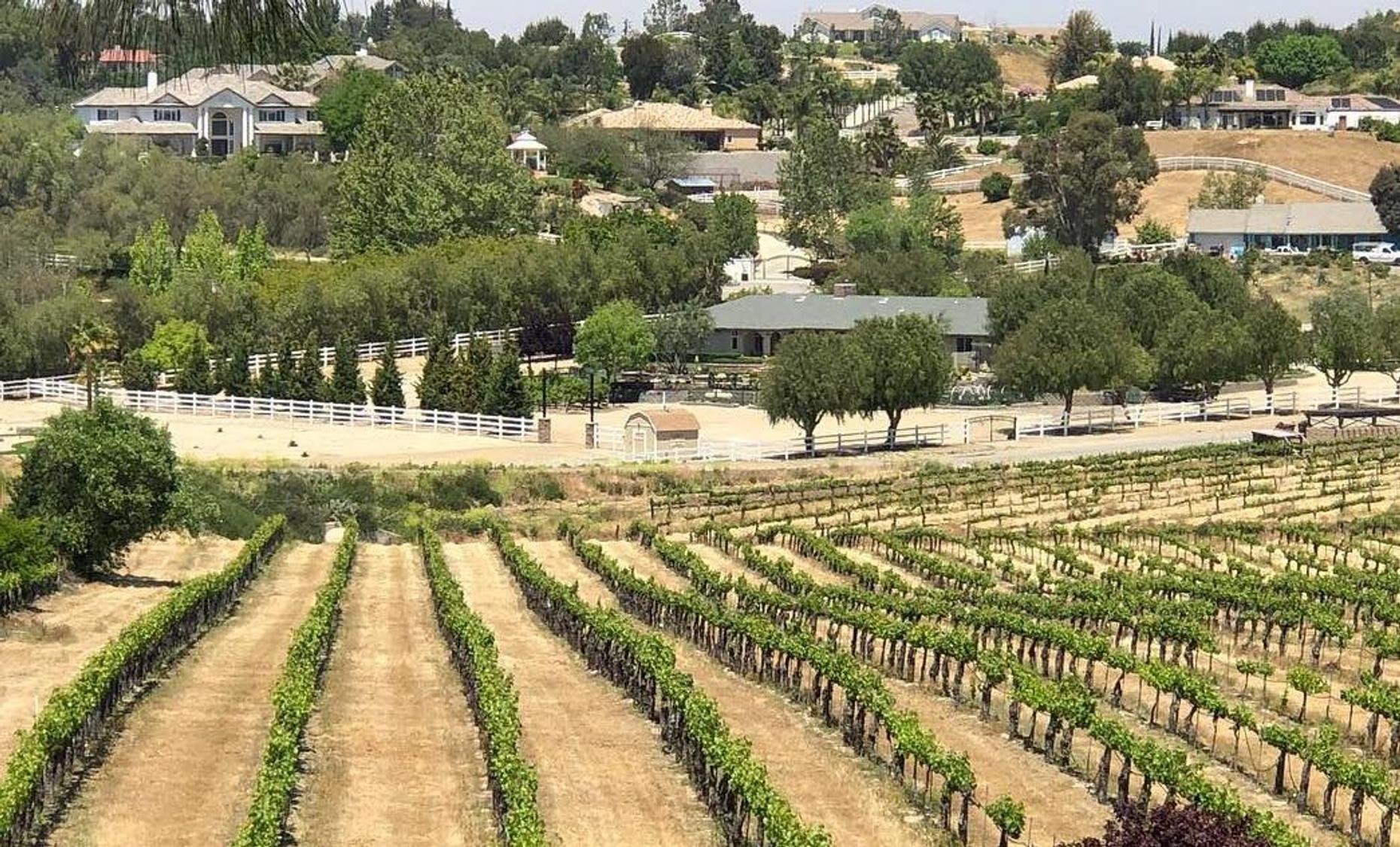 Half-Day Afternoon Wine Tour in Temecula Valley