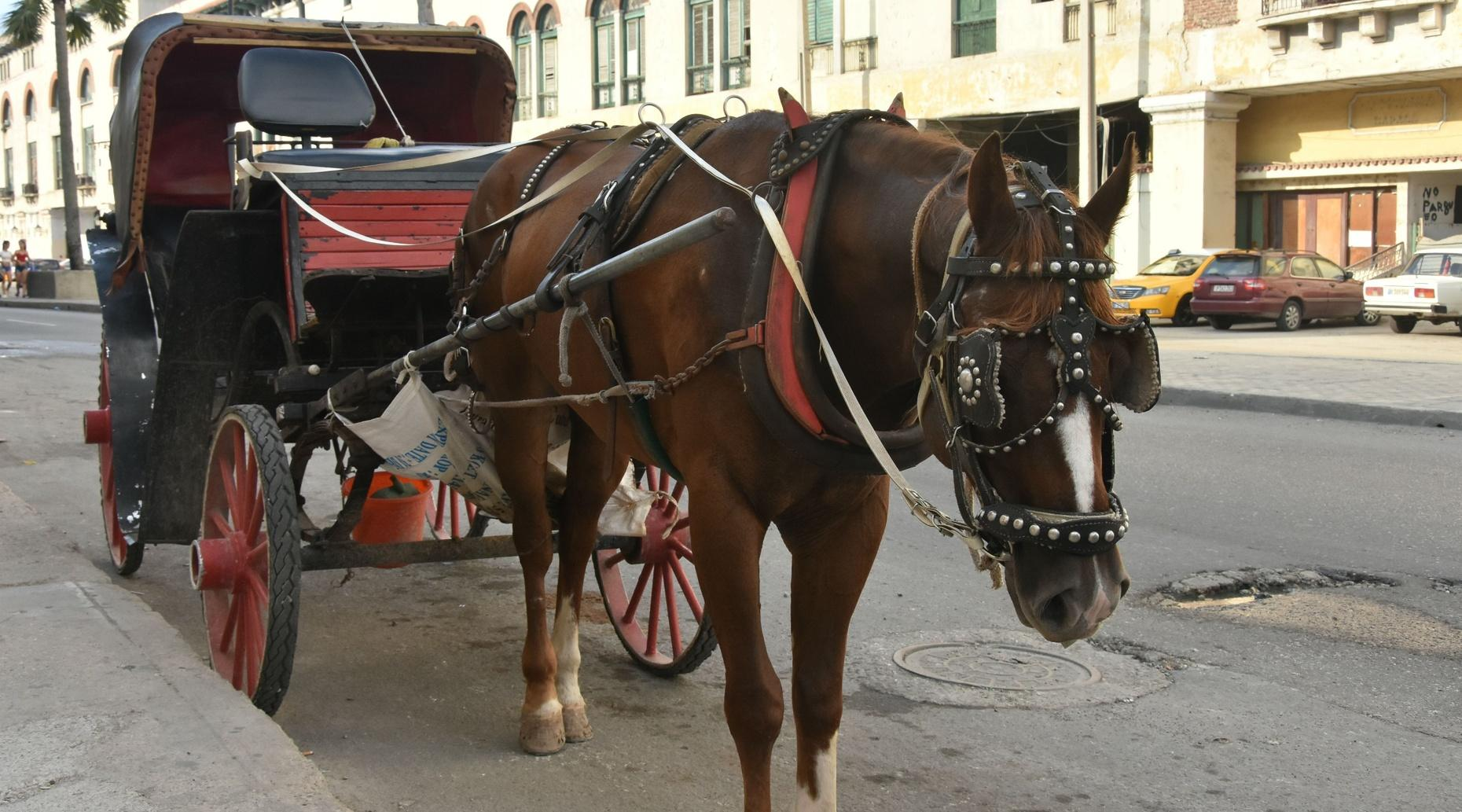Rock & Blues Horse & Carriage Tour in Memphis