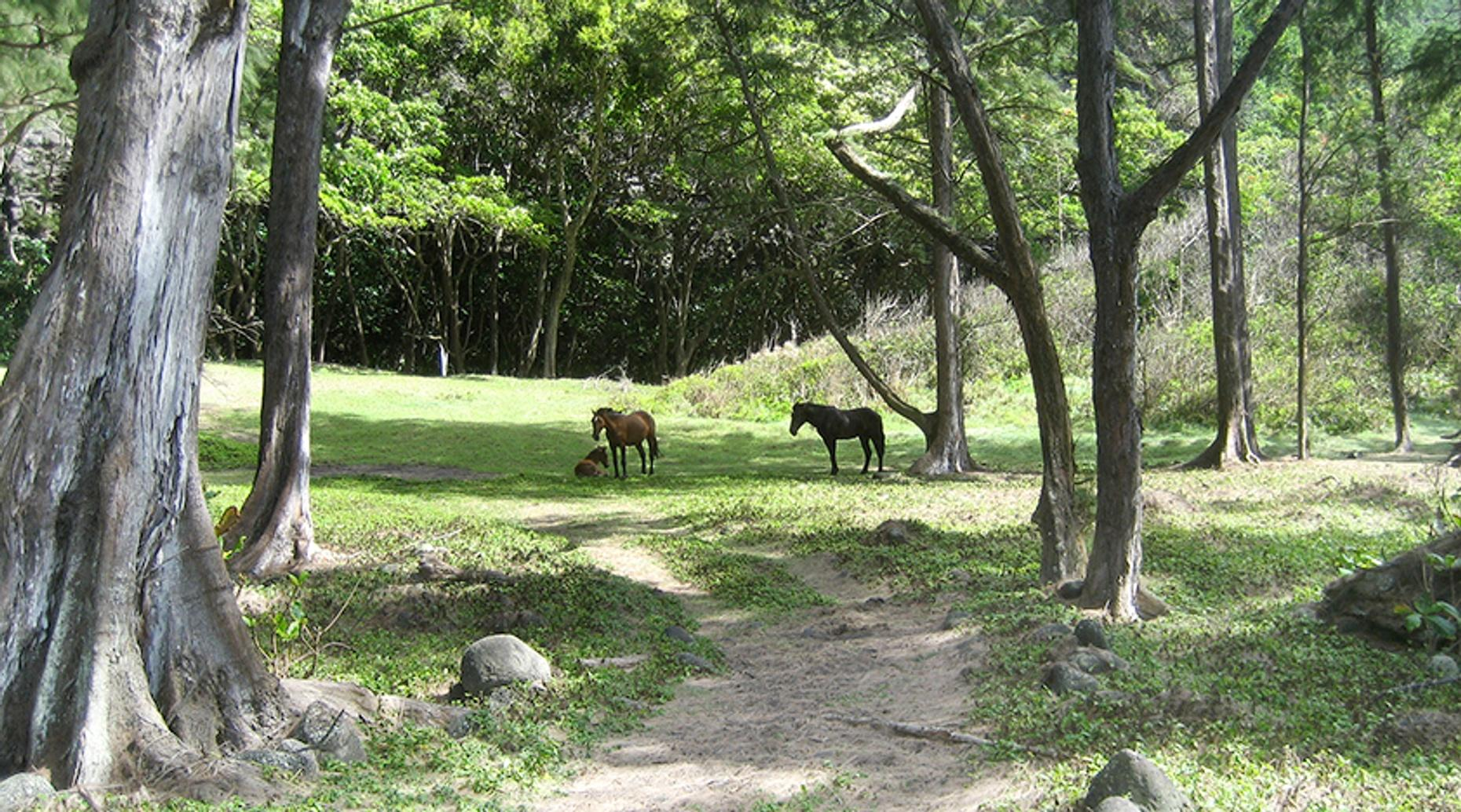 One-Hour Horseback Trail in Ed Levin Park