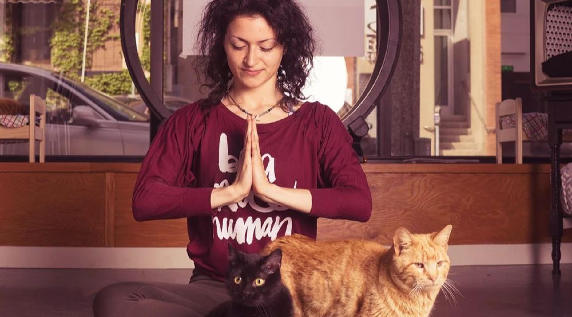 Yoga with Cats in Milwaukee