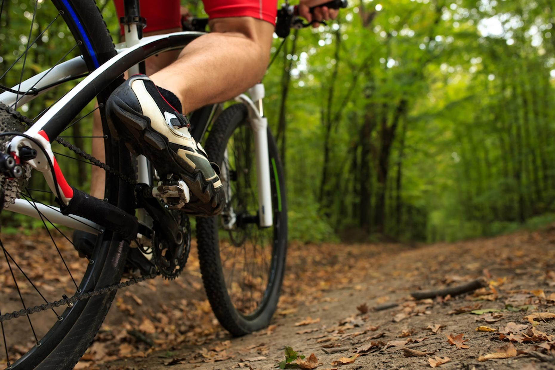 Singletrack Bike Tour in Anchorage