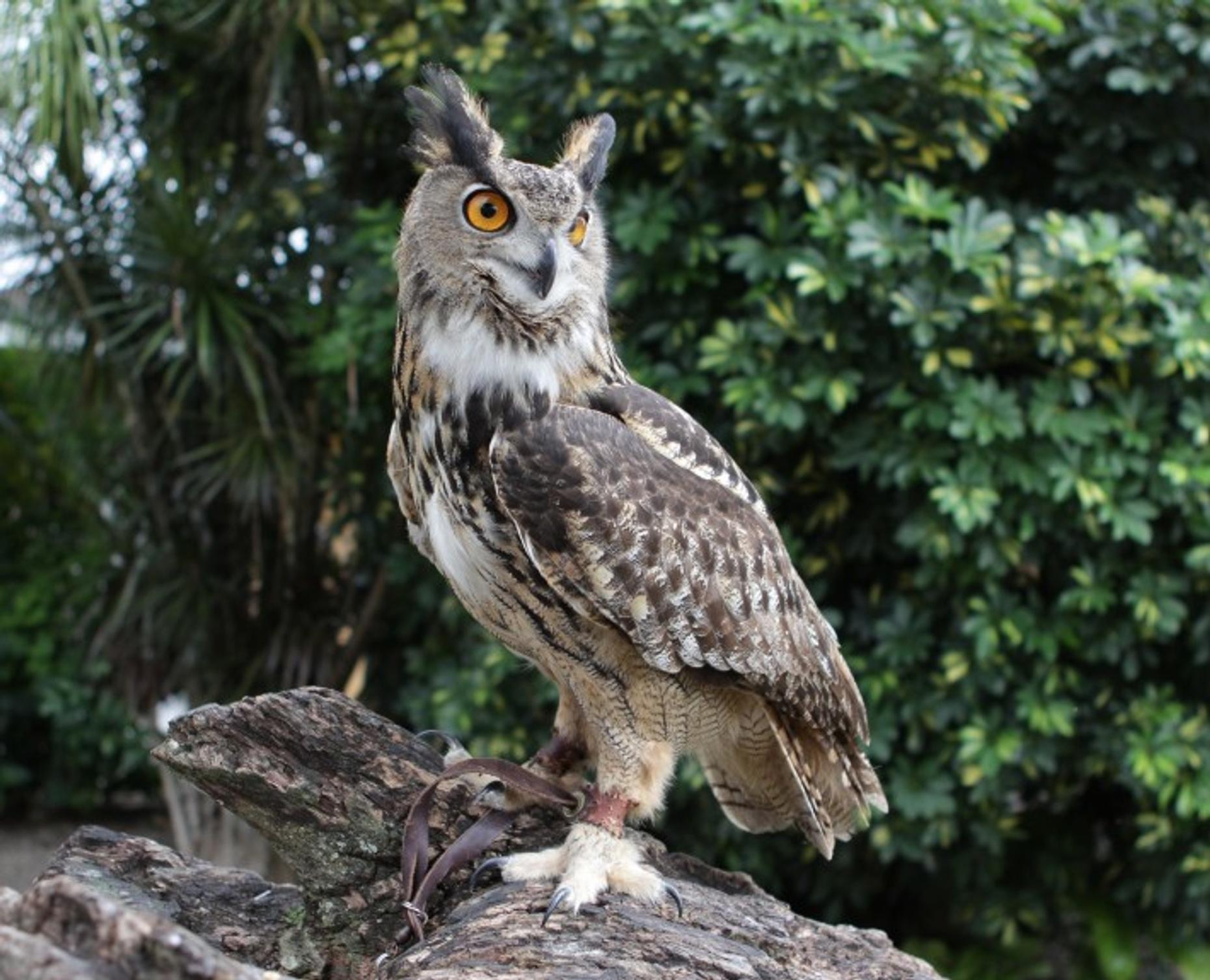 Hands-On Owl Encounter in Miami