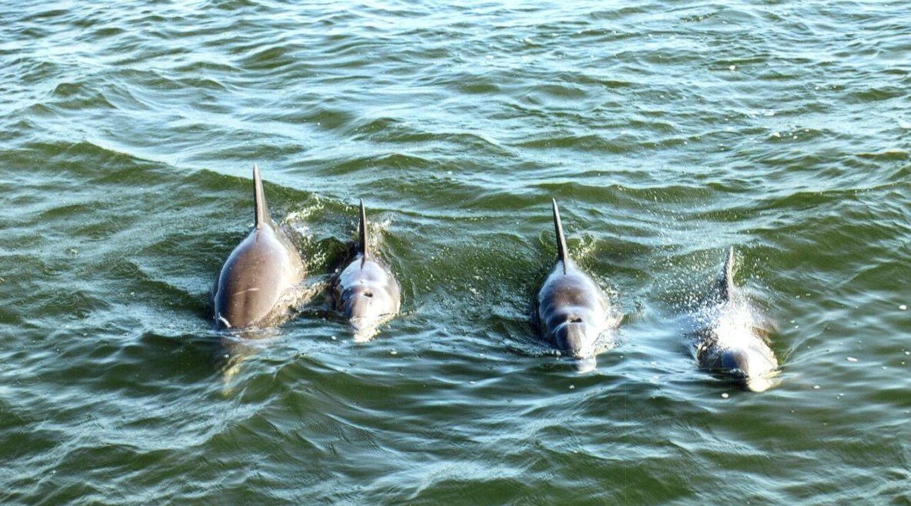 St. Petersburg Dolphin Cruise