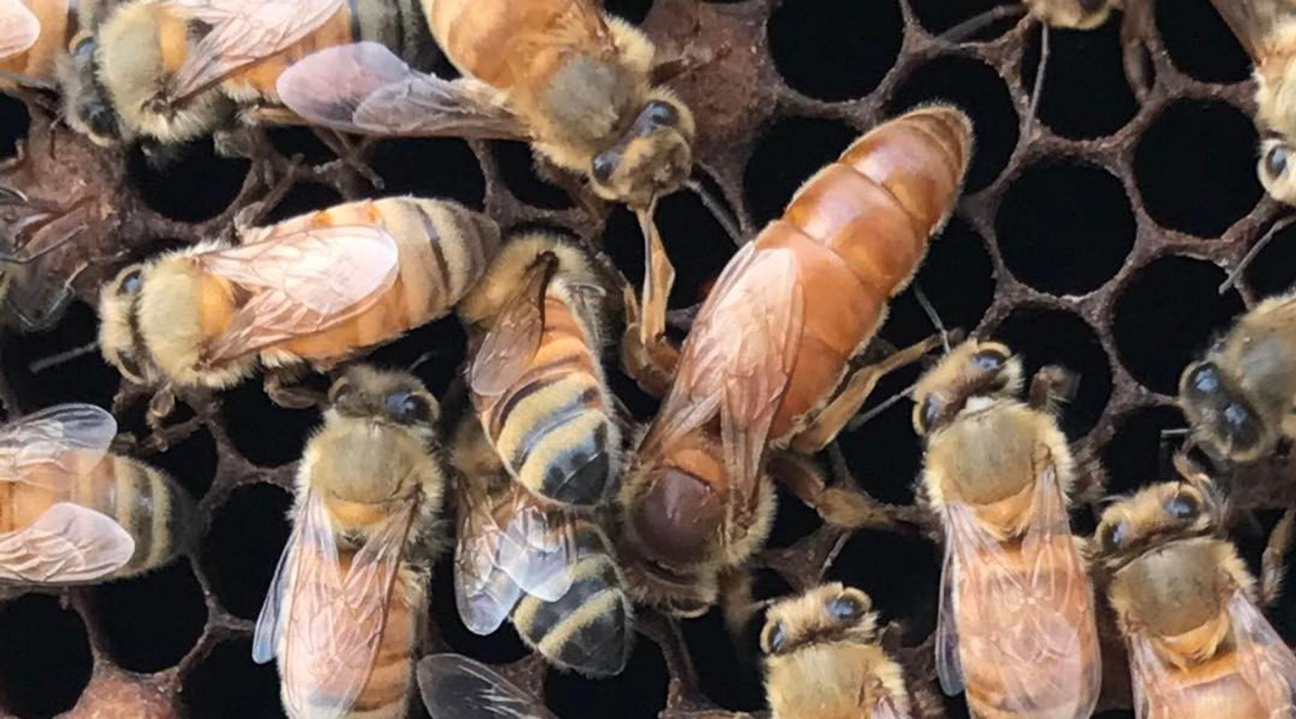 Bee to Bottle Tour