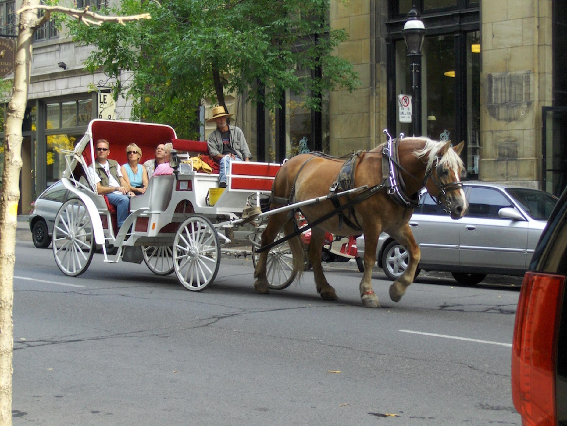 Six-Passenger Limo Carriage Ride in Dallas