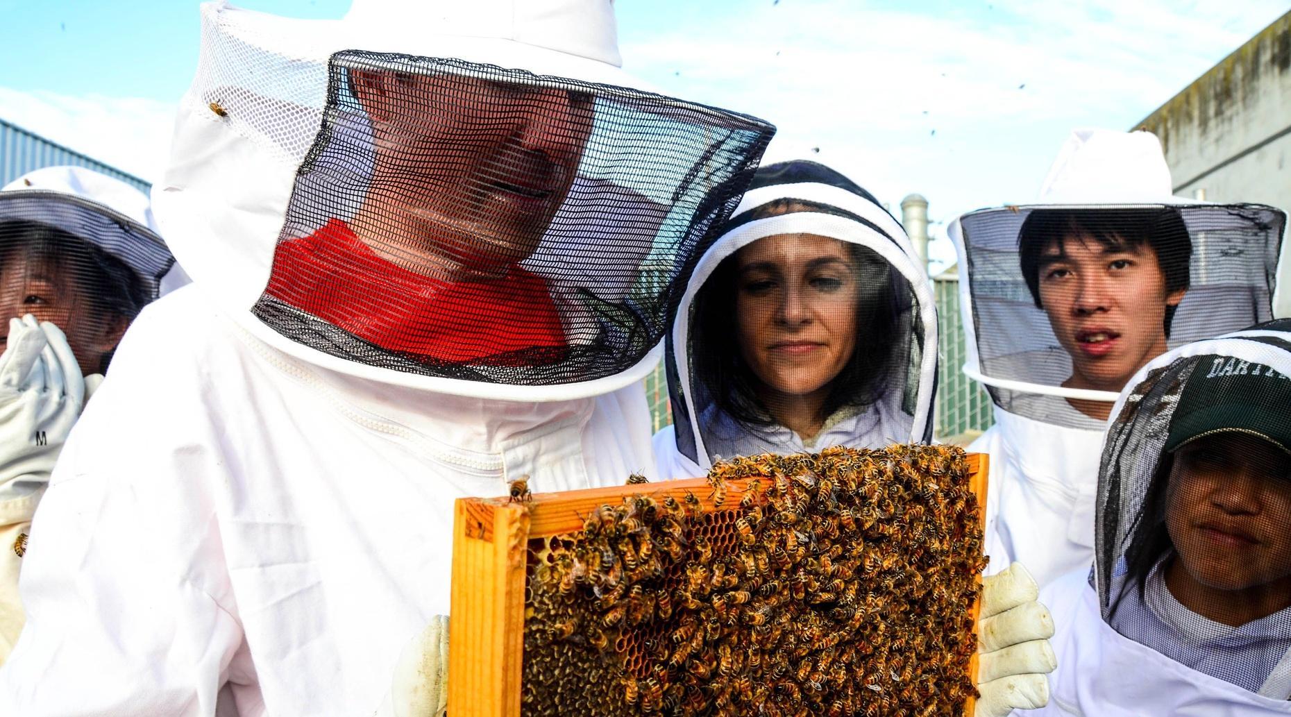 San Francisco Beginner Beekeeping Class