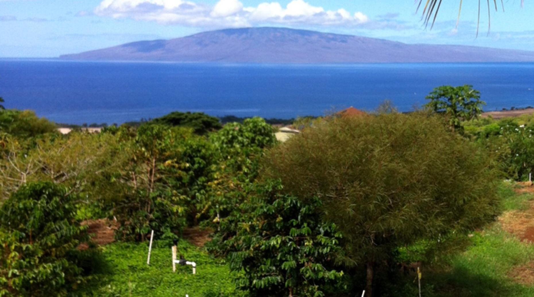 Maui Morning or Afternoon Farms Tour