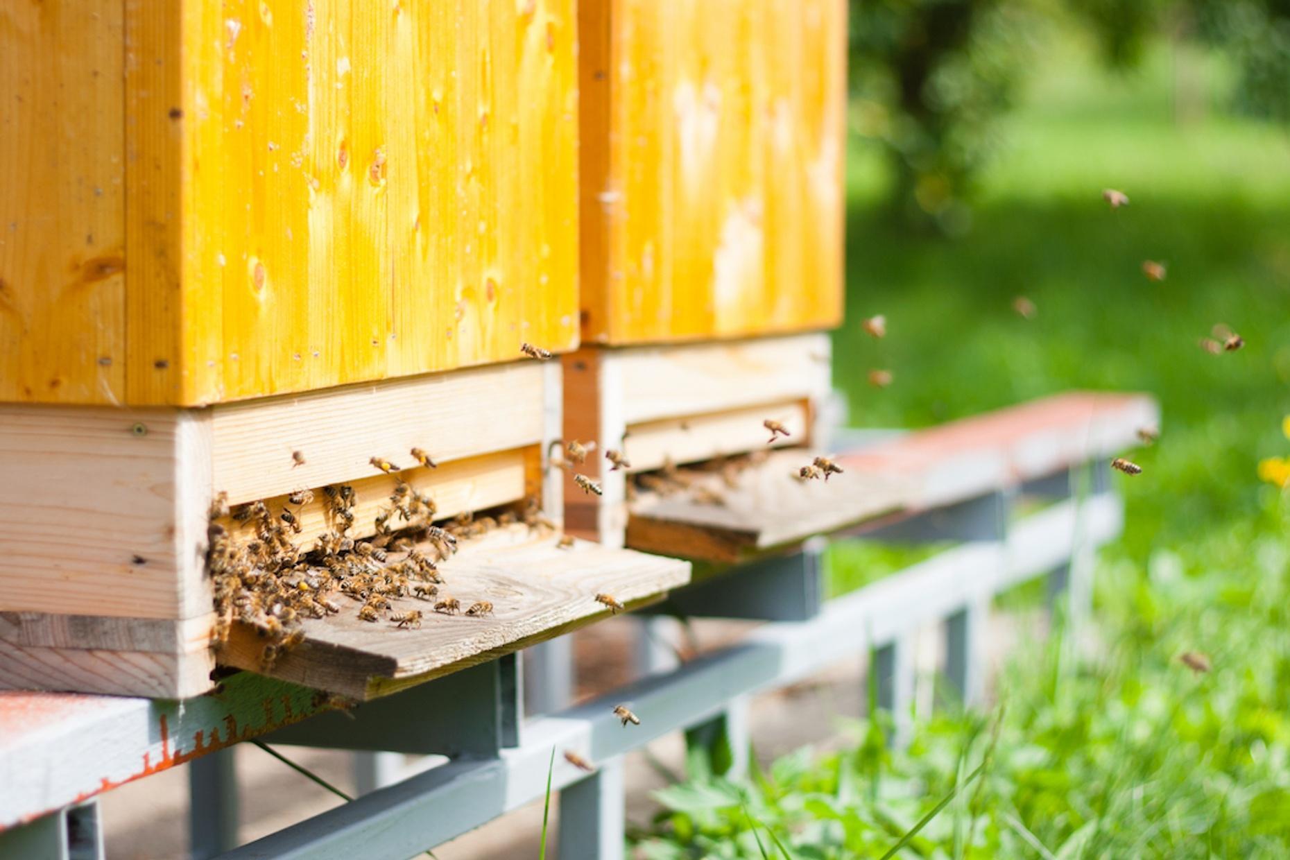 Advanced Beekeeping Class in San Francisco
