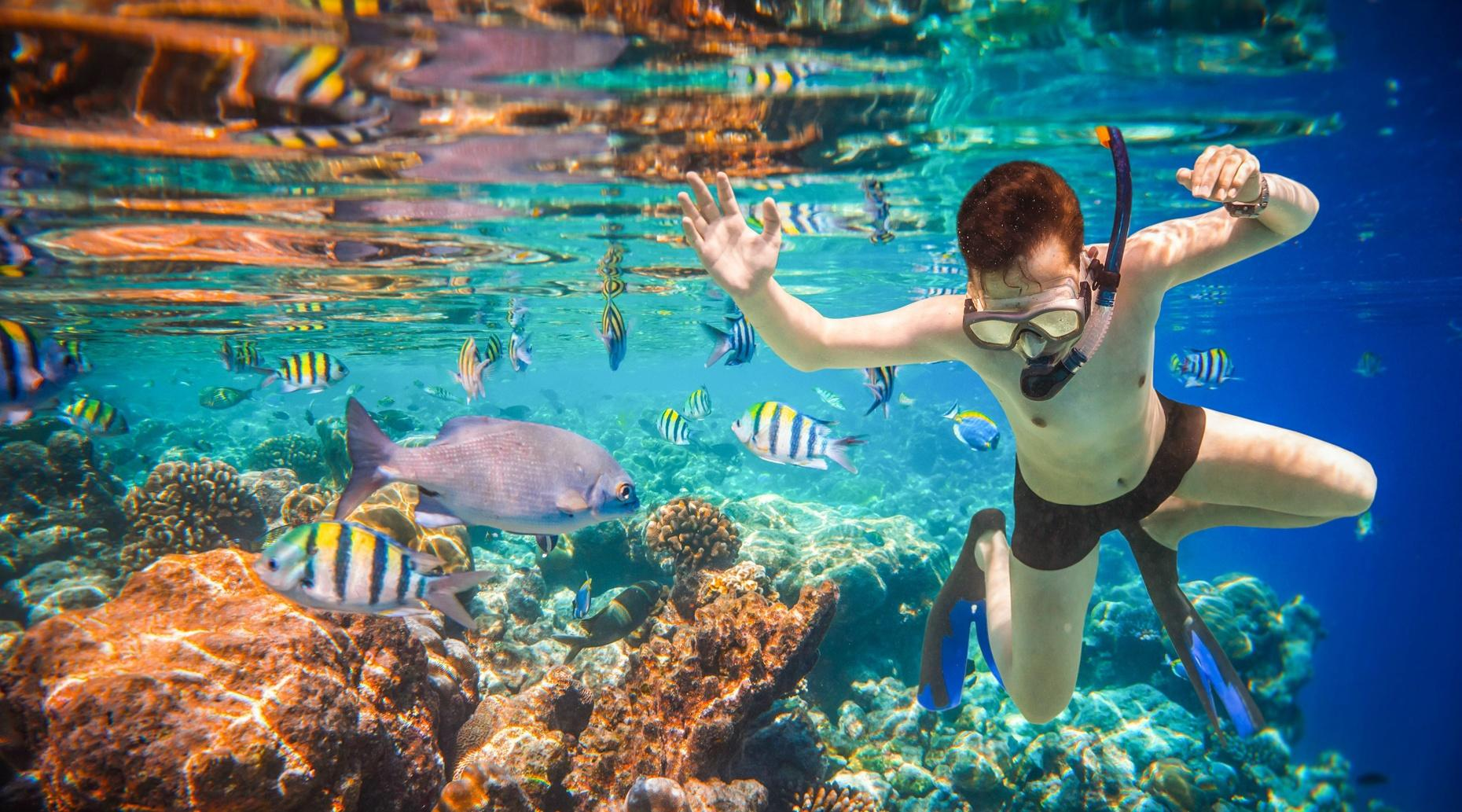 Whale Watching & Snorkeling Tour in Yelapa