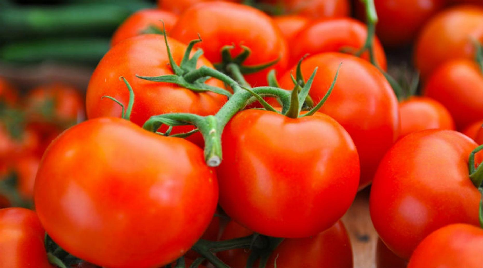 Tomato Culinary Class in Savannah