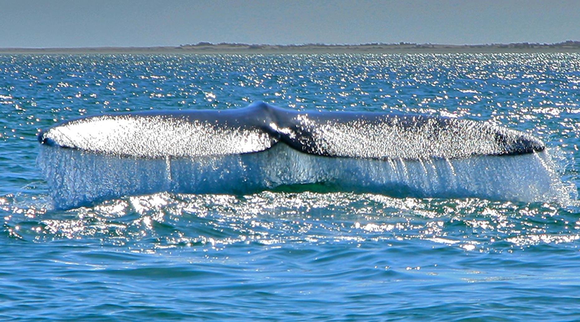 All-Inclusive Whale Watching & Snorkeling Tour