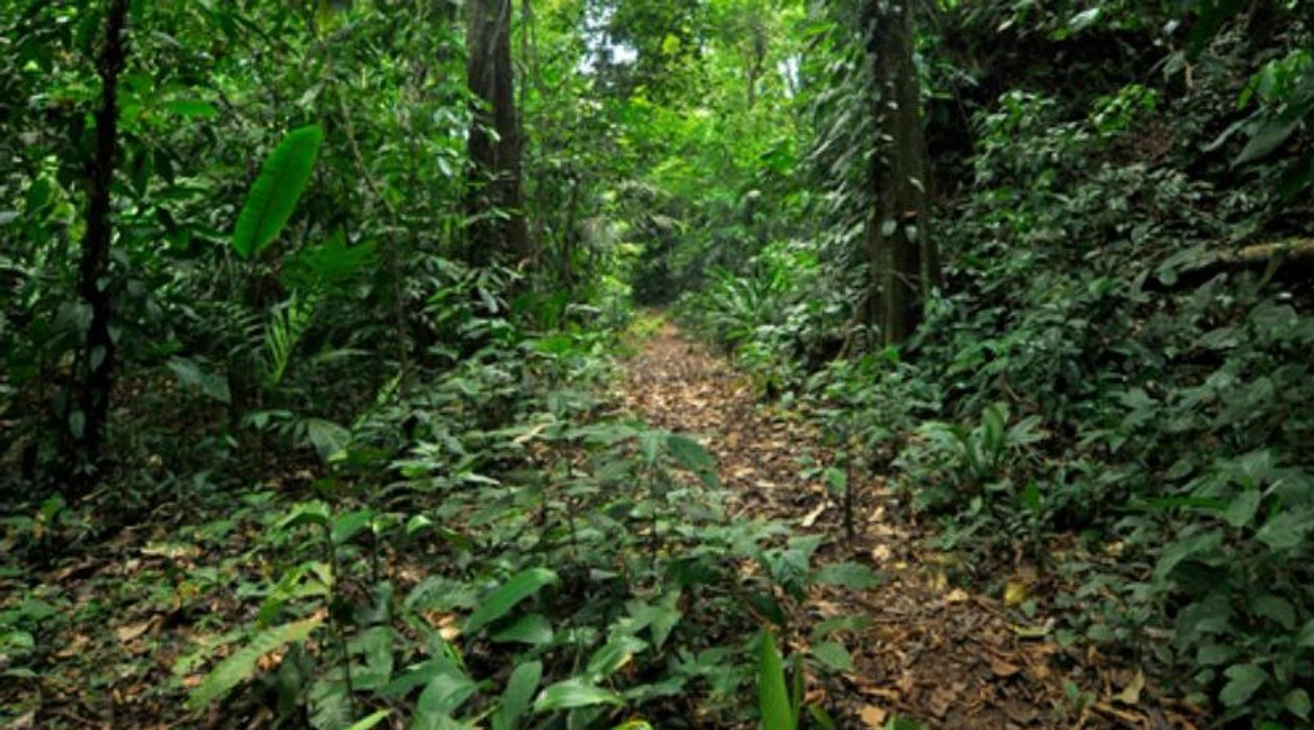 Gandoca Manzanillo Rainforest Hike