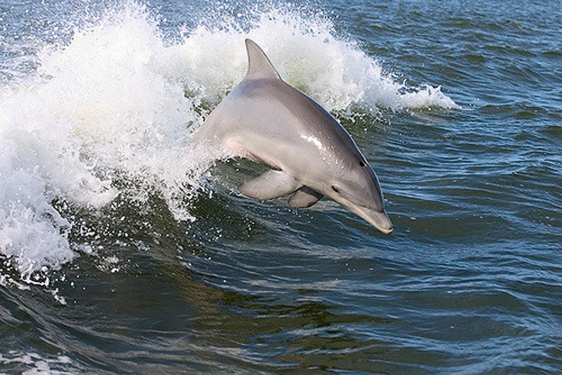 Two-Hour Dolphin Adventure Cruise on Naples Bay