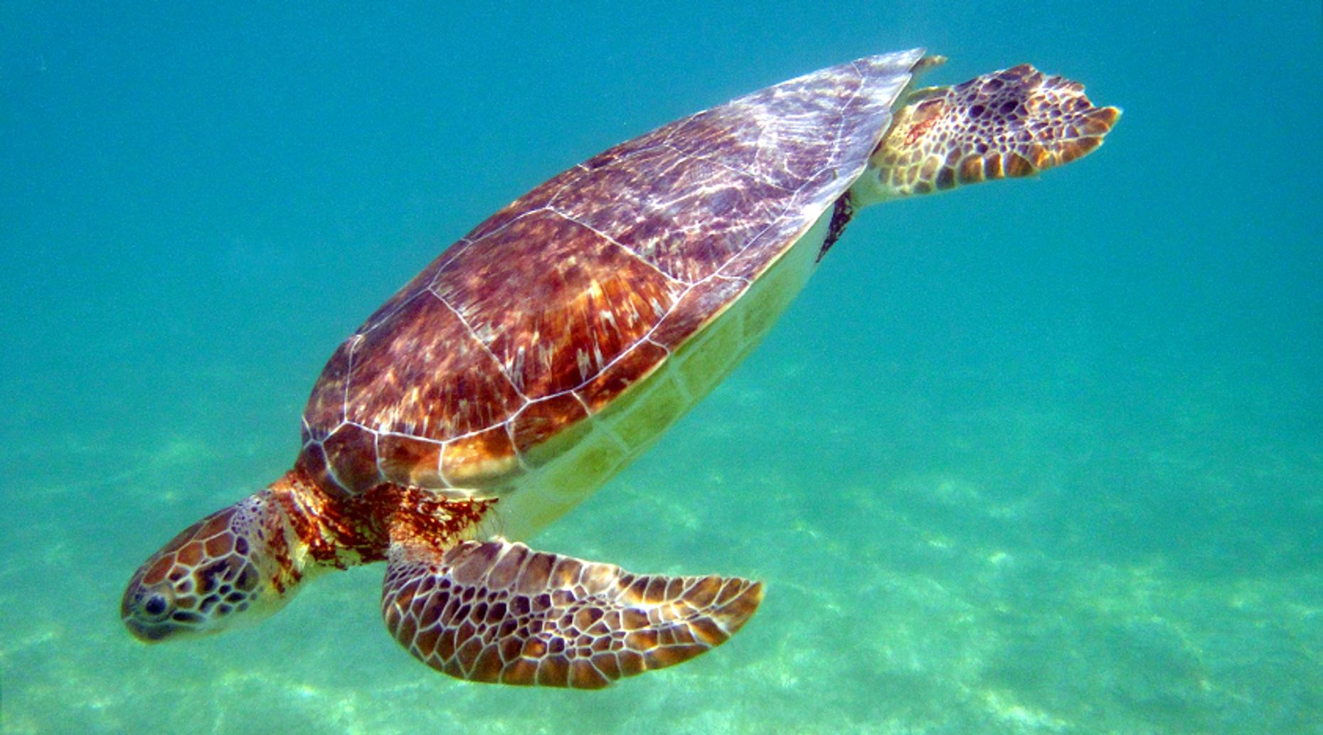 Best of Galapagos Seven-Day Adventure from Quito