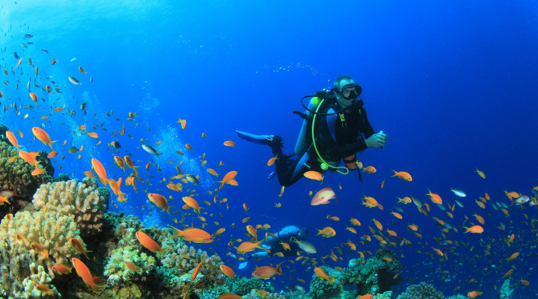 Cabo Pulmo Dive Tour From Cabo San Lucas