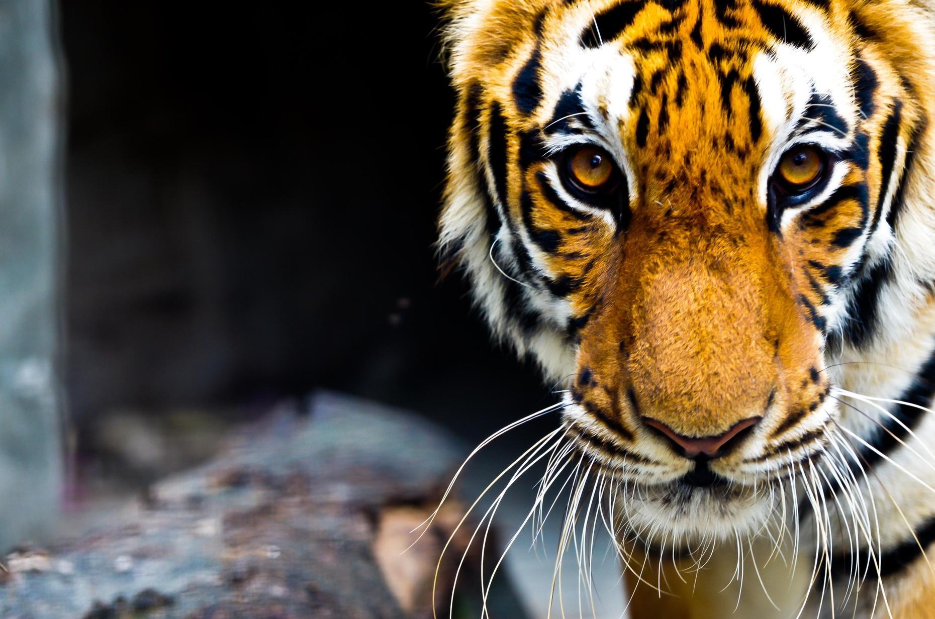 Wild Cats Sanctuary Tour for Kids