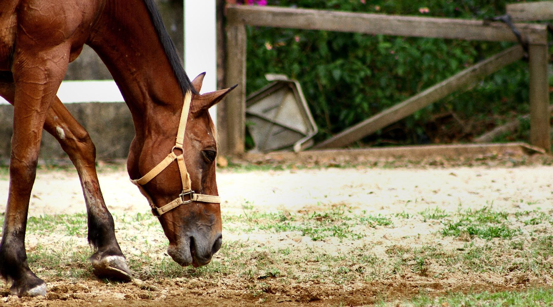 Stewart Trail Horse Ride in Point Reyes
