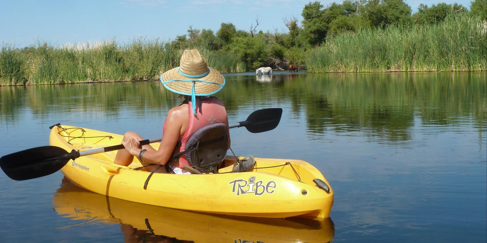 2-Hour Self-Guided Foxtail Kayak Trip