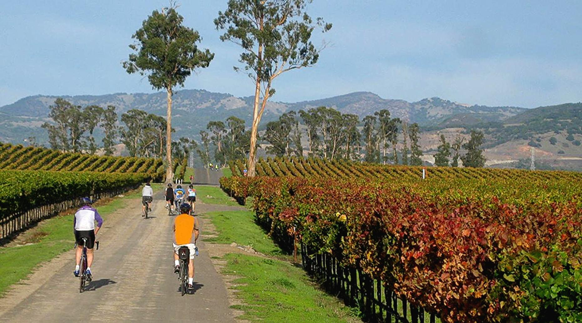 Pinot Noir Wine Bike Tour in Russian River Valley