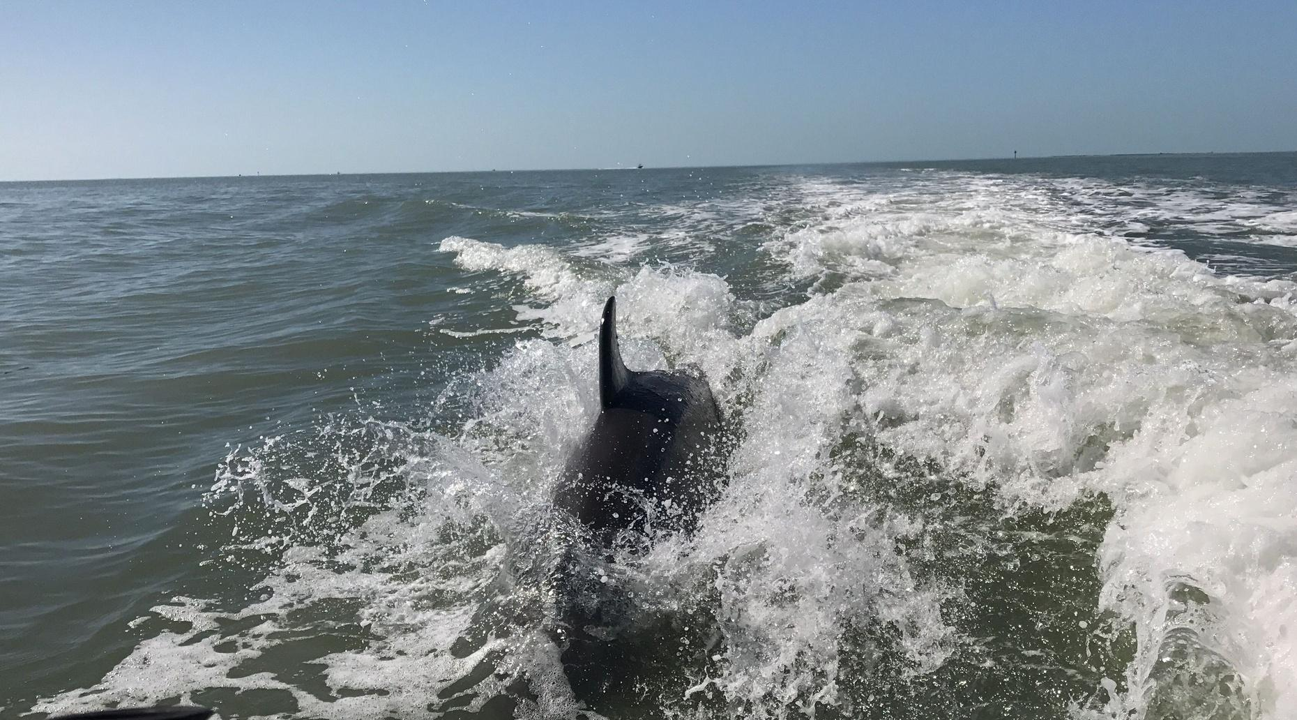 Dolphin, Birding and Shelling Tour