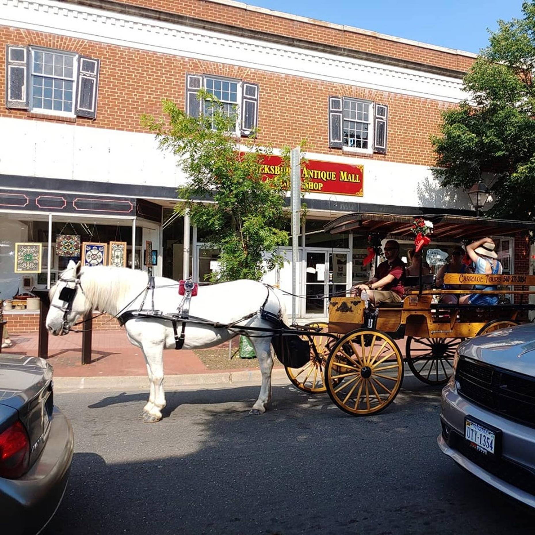 Private Fredericksburg Horse Carriage Ride
