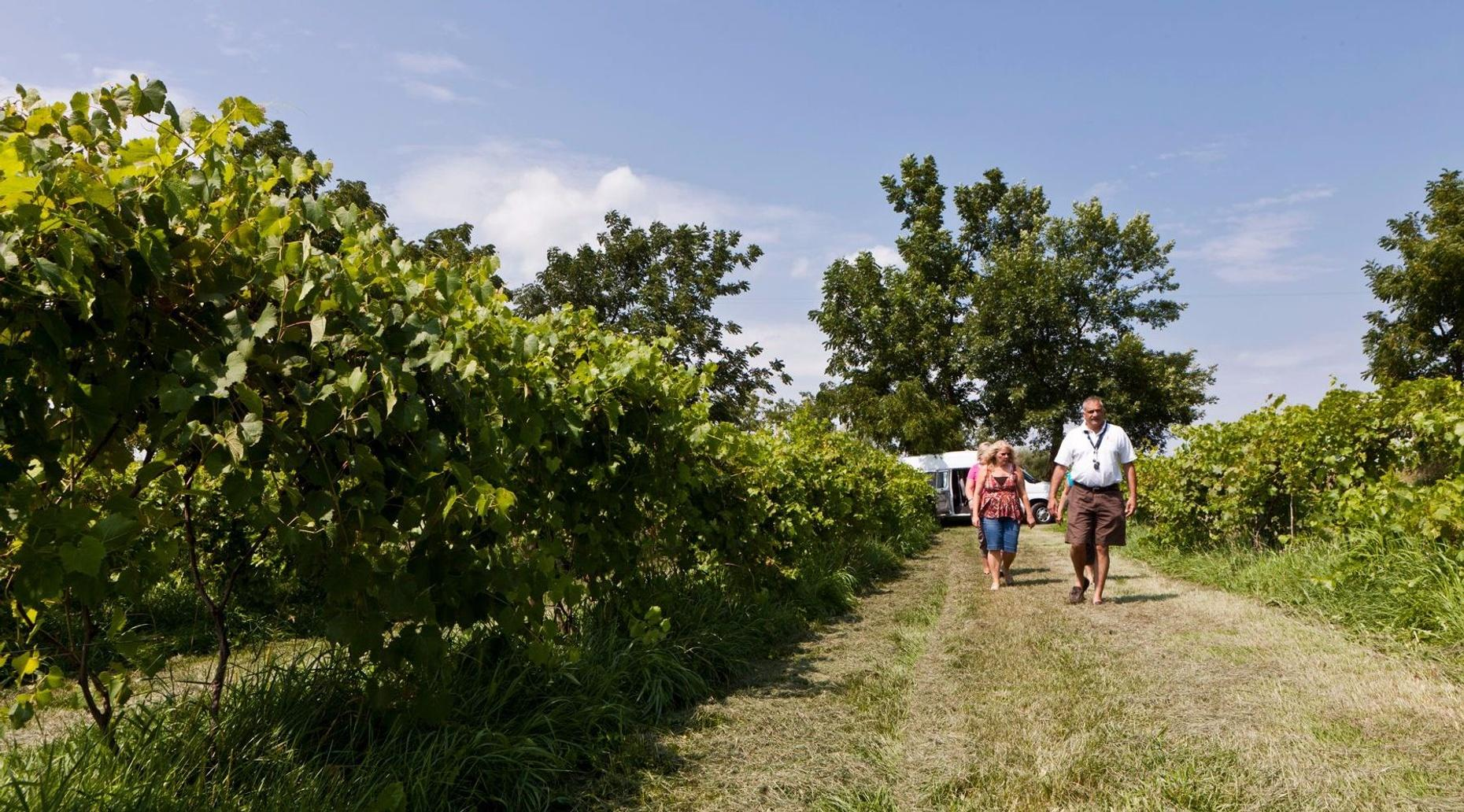Private Wine Tour to SW Michigan