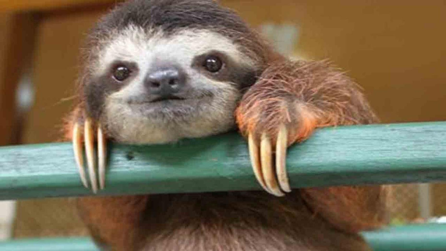 Sloth Encounter at a Zoo in Georgia
