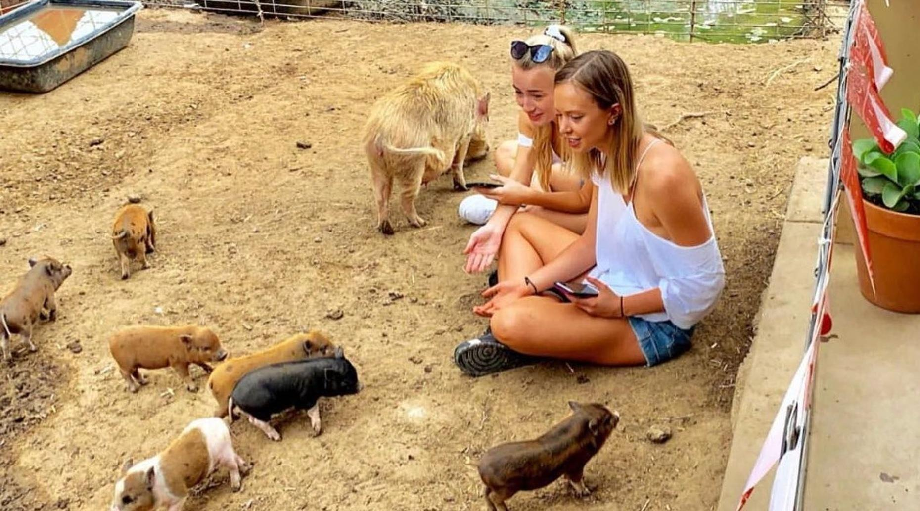 Mini Pig Experience in Valley Center, CA
