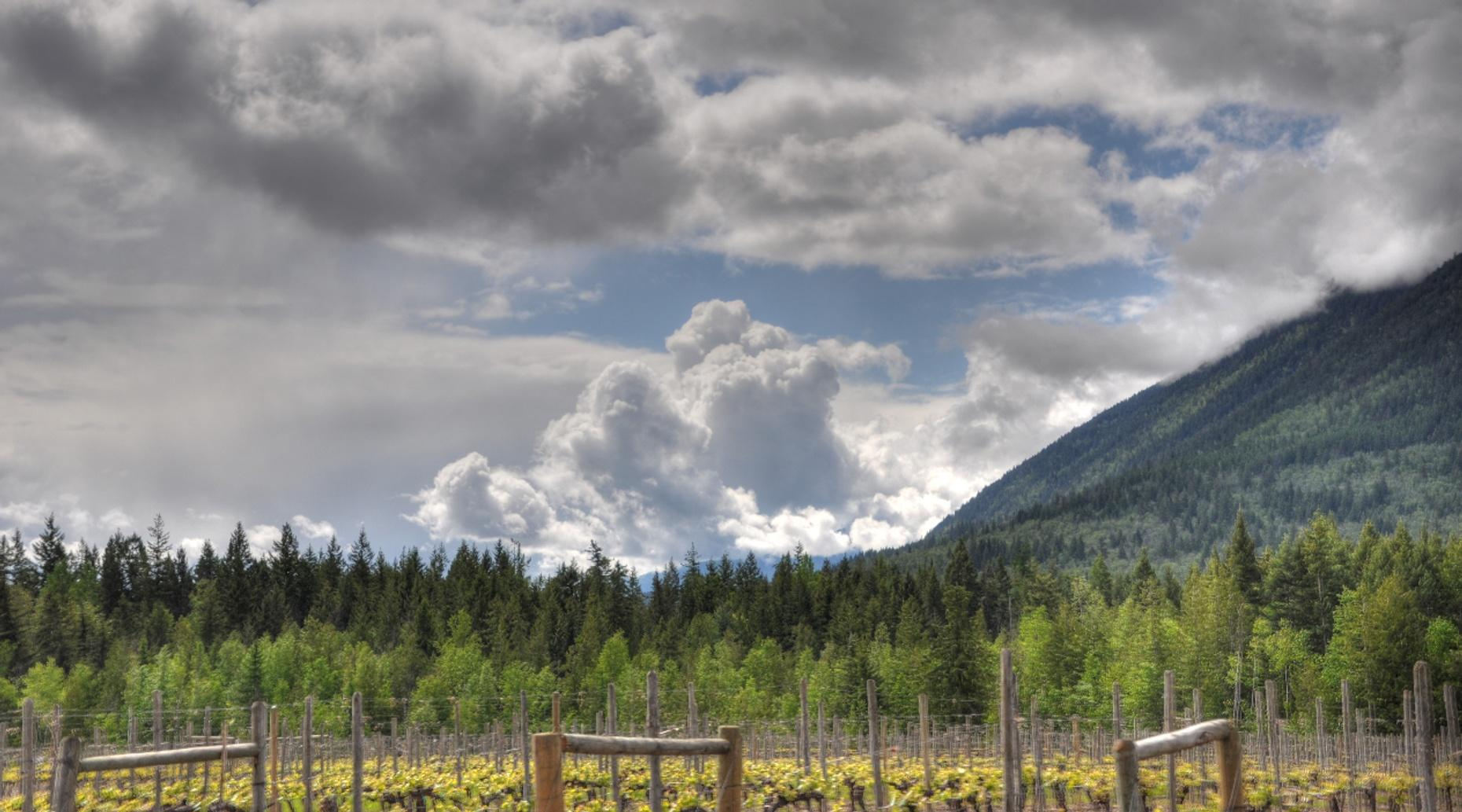 Guided Winery Tour of the Cowichan Valley in Victoria