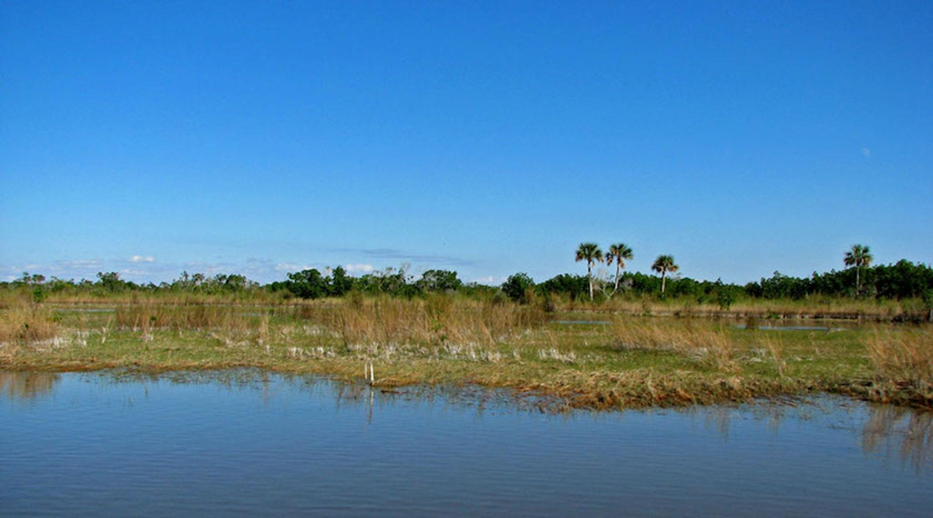 Private One-Hour Everglades Airboat Tour