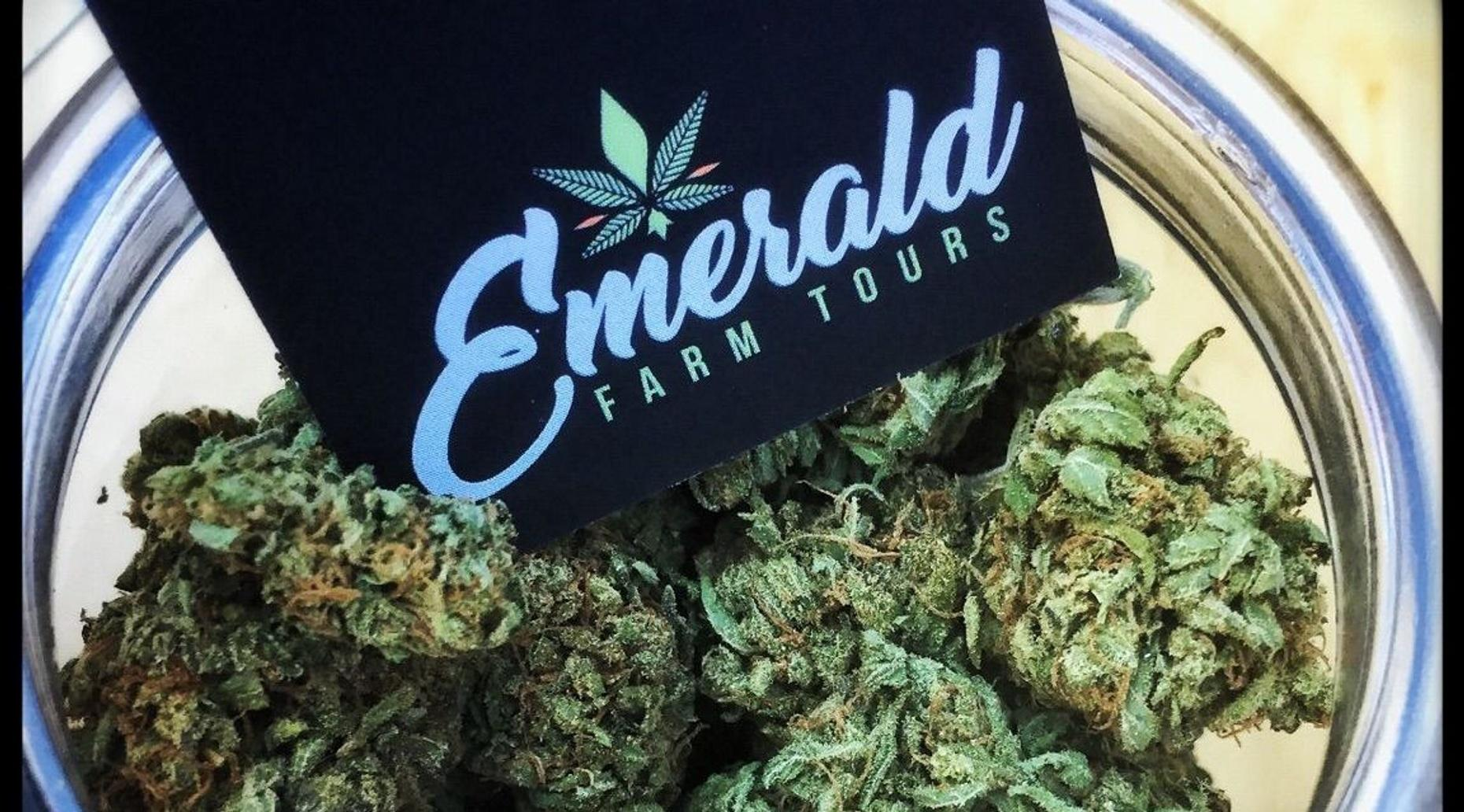 Cannabis Seed-to-Sale Tour