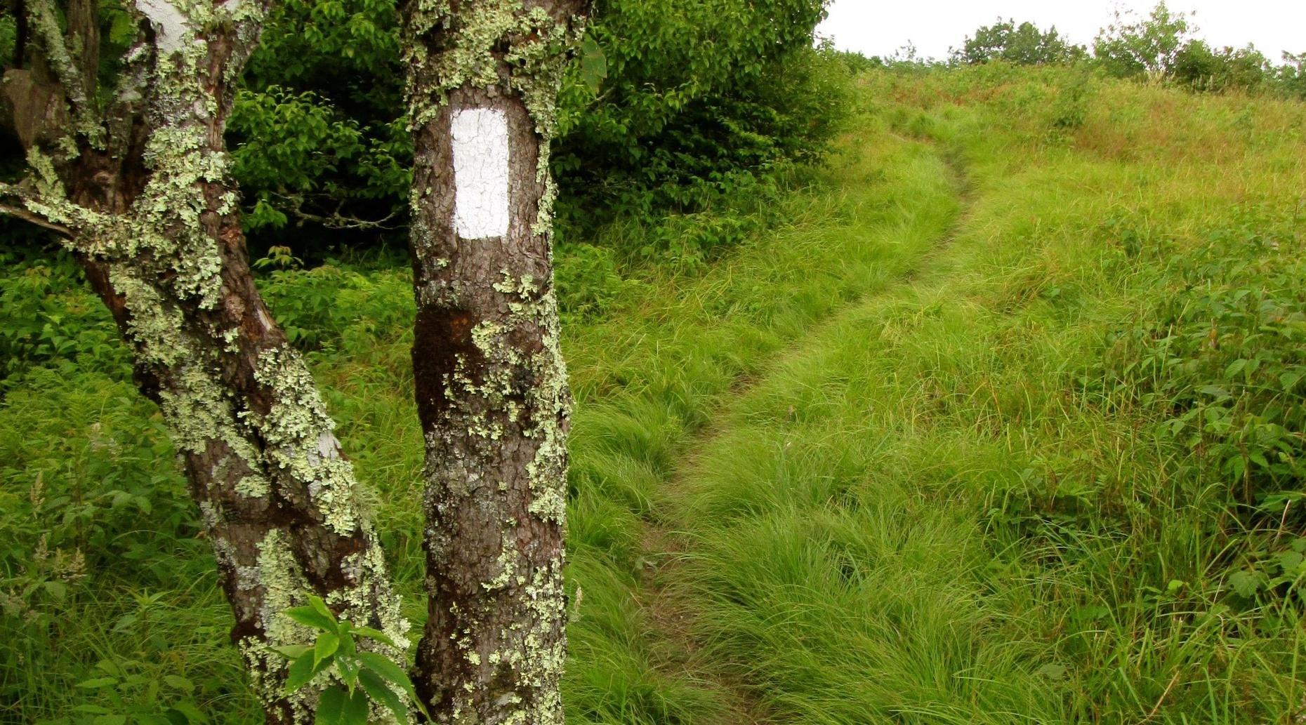 Appalachian Trail Day Hike